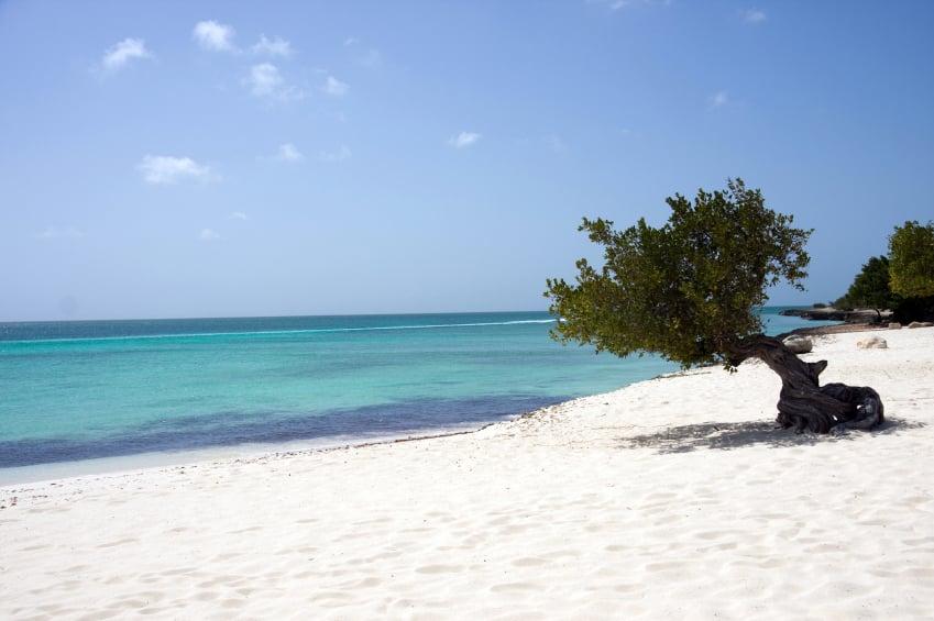 Árbol Divi Divi en Eagle Beach, Aruba