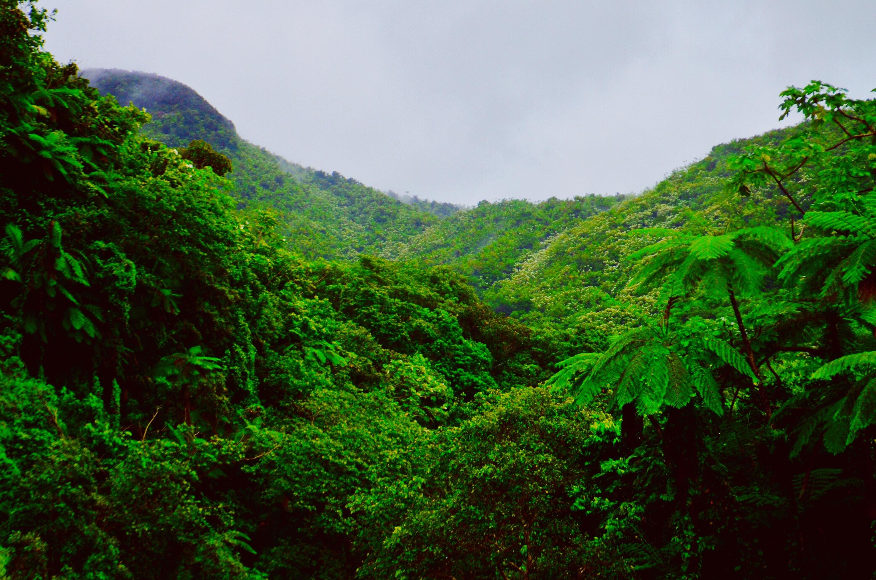 Bosque Nacional El Yunque en Puerto Rico