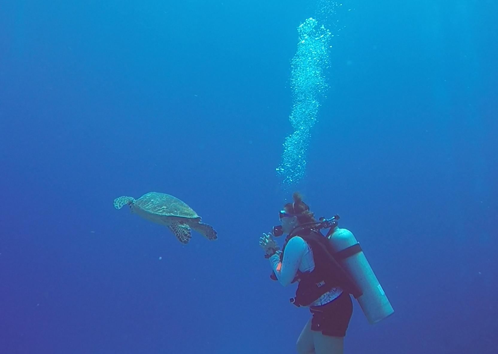 Mujer buceando con tortuga en Islas Caimán