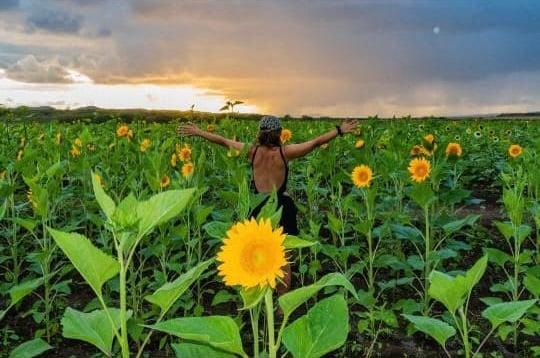 Mujer en campo Finca El Girasol en Puerto Rico-1