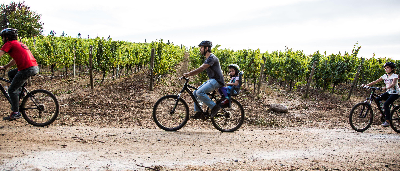 Cuatro personas paseando en bicicleta entre los viñedos de Viña Matetic