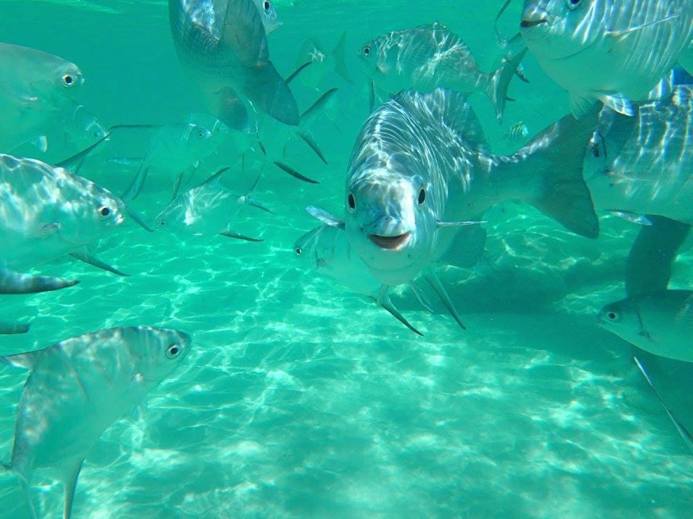 Grupo de peces bajo el mar en Islas Caimán