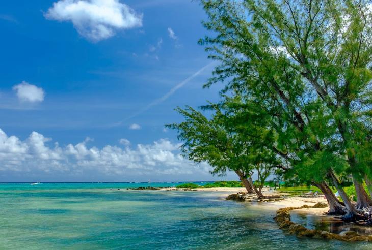 Playa con árboles en Islas Caimán