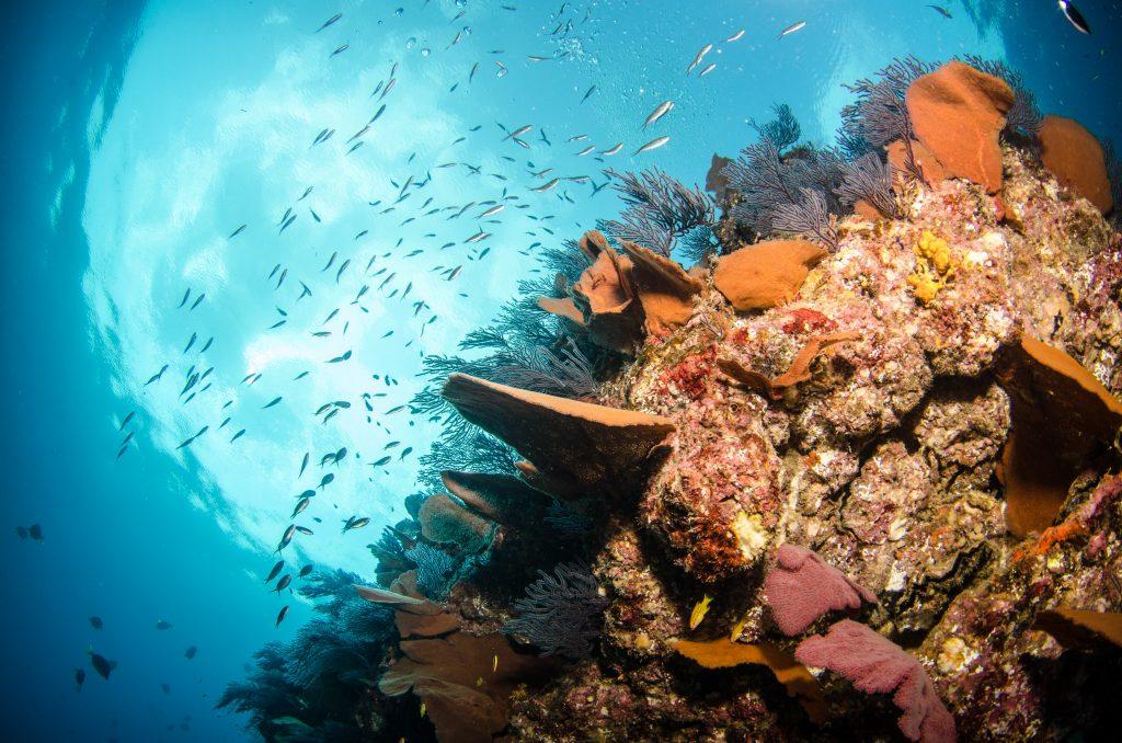 Arrecifes en el mar de Cortes