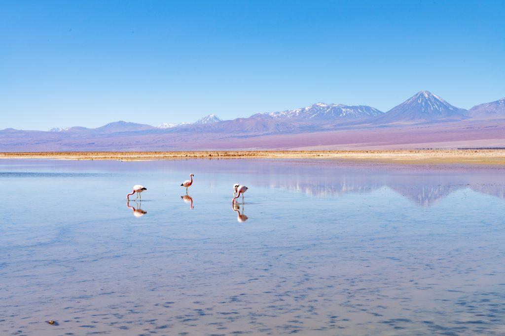 Flamencos en Laguna Chaxa