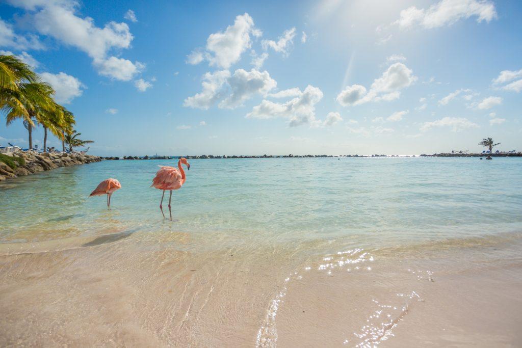 Flamencos en una playa de Aruba