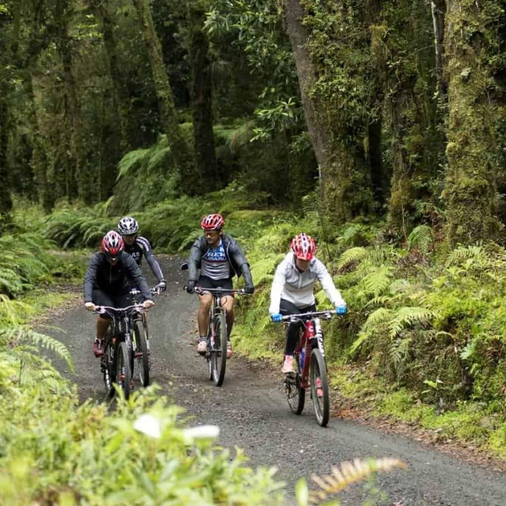 Grupo de personas haciendo una excursion en bicicletas