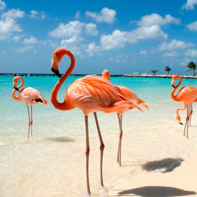 La-Isla-Feliz-del-Caribe